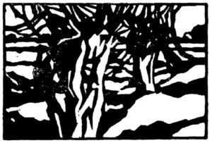 Kopfweiden, Linoschnitt, 13 x 9 cm